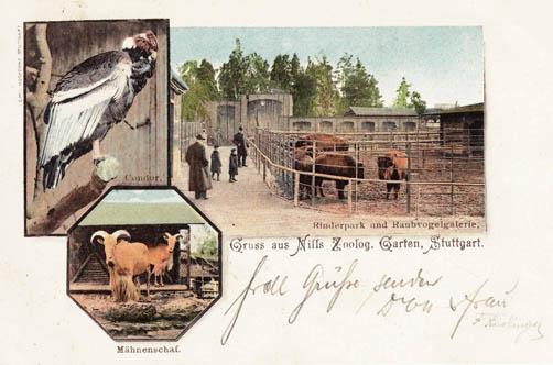 Eine Ansichtskarte von Nills Tiergärten mit Condor und Bisons. Sammlung: Kurz