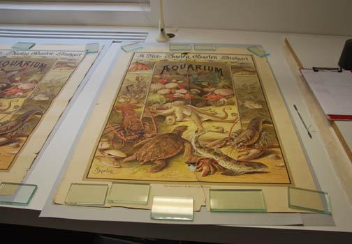 Das uralte, neu entdeckte Werbeplakat für Nills Aquarium auf dem Arbeitstisch der Re-stauratorin. Foto: Aull